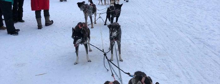 Chena Dog Sledding is one of Tempat yang Disukai Julie.