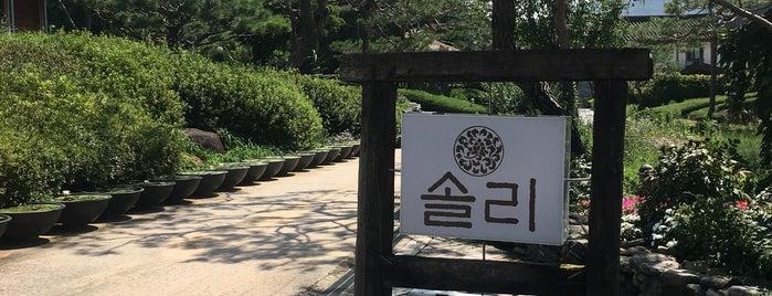 솔리 is one of 금안.
