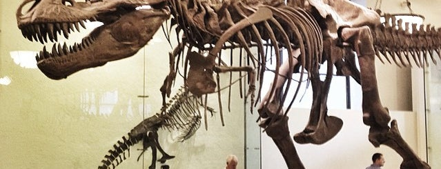 American Museum of Natural History is one of 100 Museums to Visit Before You Die.