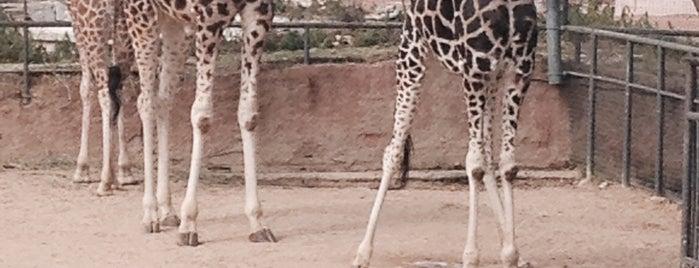 Zoo de Barcelona is one of Barcelona-To-Do List.