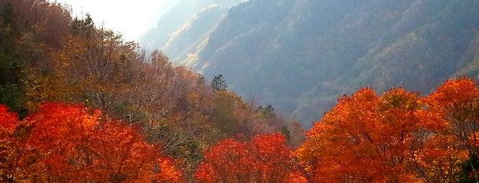 大台ヶ原山 is one of アウトドア&景観スポット.