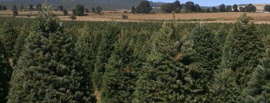 Bosque De Los Arboles De Navidad is one of Lieux qui ont plu à Maria.