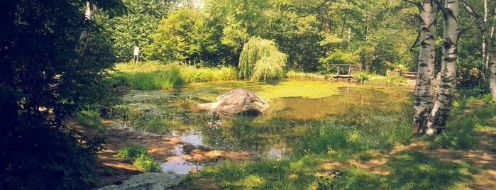 Дендрариум (Arborium) is one of สถานที่ที่ Zorata ถูกใจ.