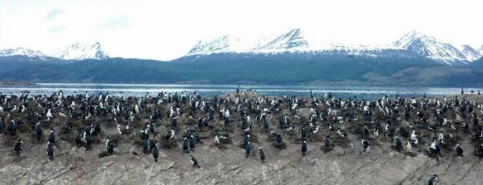 Isla de los Cormoranes is one of Patagonia (AR).