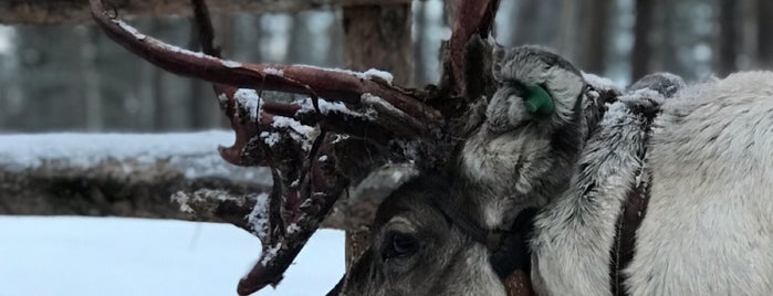 Reindeer Farm is one of Posti che sono piaciuti a Roger.