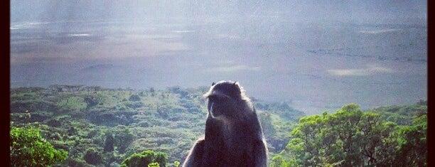 Ngorongoro Sopa Lodge is one of Posti che sono piaciuti a Dmitry.