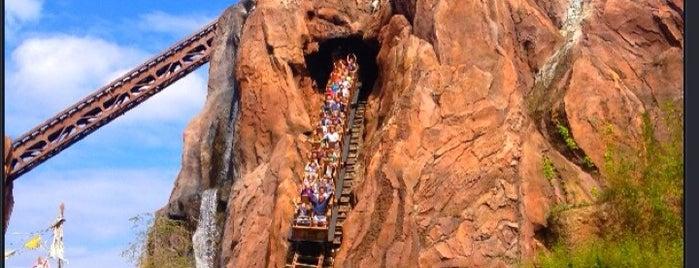 Disney's Animal Kingdom is one of Walt Disney World.