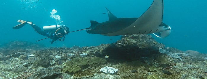 Manta Point Dive Site is one of Scuba Diving Indonesia.