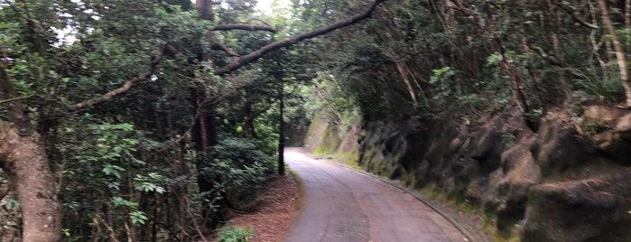Hong Kong Trail (Section 1) is one of Meri 님이 좋아한 장소.