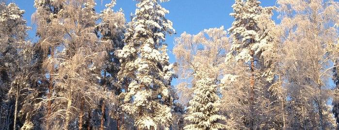 Мичуринское is one of Tempat yang Disukai Maksim.