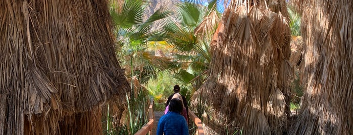 Coachella Valley Preserve is one of Palm Spings.