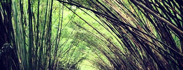 Bamboo Cathedral is one of Stef's Liked Places.