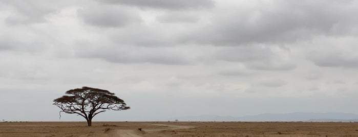 Amboseli National Park Kenya is one of KENYA.