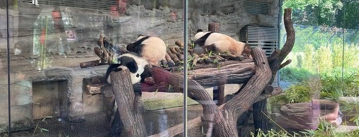 Panda Garden is one of Berlin.