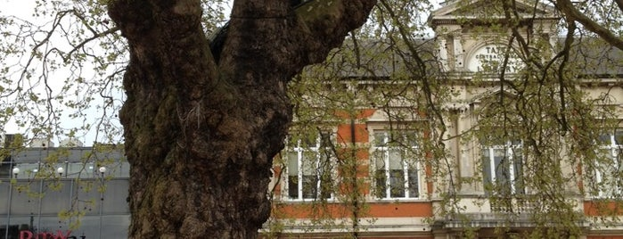 Windrush Square is one of The Great Trees of London.