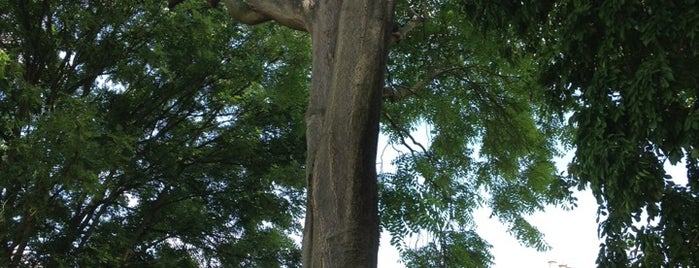 Tree of Heaven is one of The Great Trees of London.