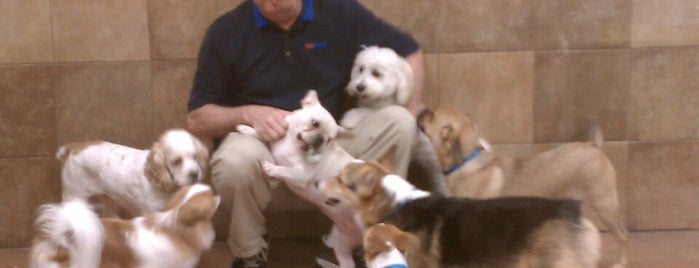 Doggie Day Camp @ Petsmart is one of Delray.