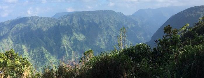 Alakai Swamp is one of Kauai.