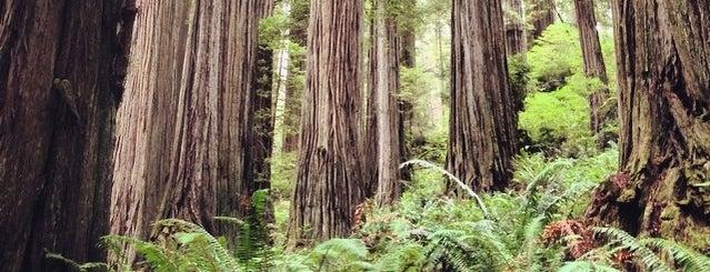 Boy Scout Tree is one of Tempat yang Disimpan Neil.