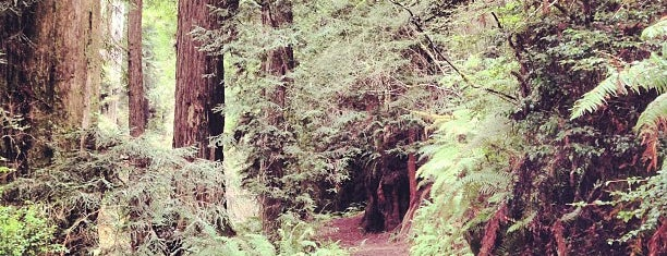 Redwood National Park is one of National Recreation Areas.