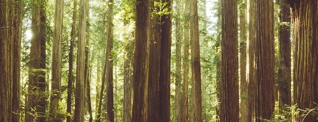 Redwood National Park is one of California - The Golden State (Northern).