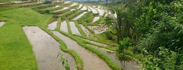 Jatiluwih Rice Terraces is one of Bali.