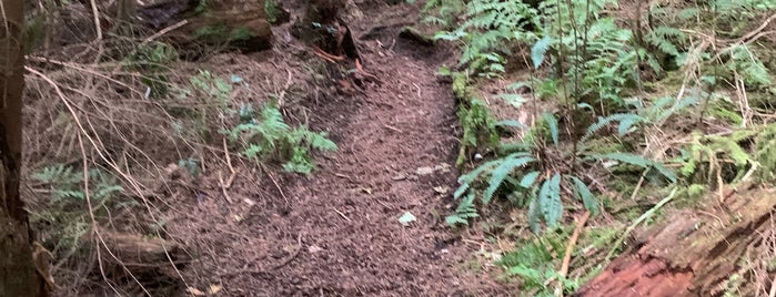 Squak Mountain State Park is one of Seattle.