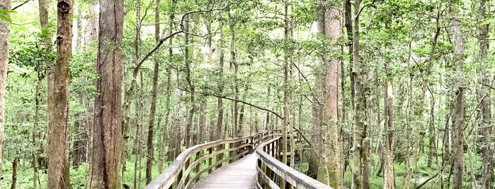 Congaree National Park is one of National Recreation Areas.