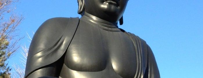 東京大仏 (乗蓮寺) is one of Lieux qui ont plu à Masahiro.