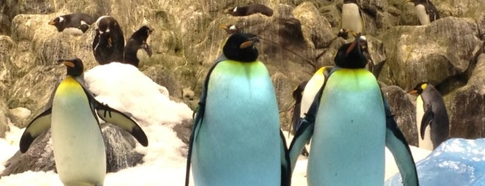 Loro Parque - Planet Penguin is one of Тенерифе.
