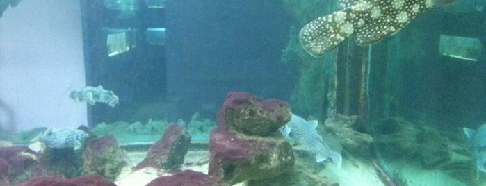El Gouna Aquarium is one of El Gouna.