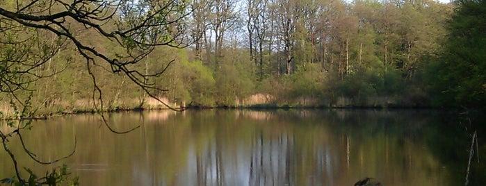 Alte Mühle is one of Lugares guardados de marnie.