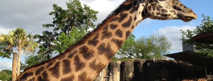 Giraffe African Exhibit is one of Posti che sono piaciuti a Samah.