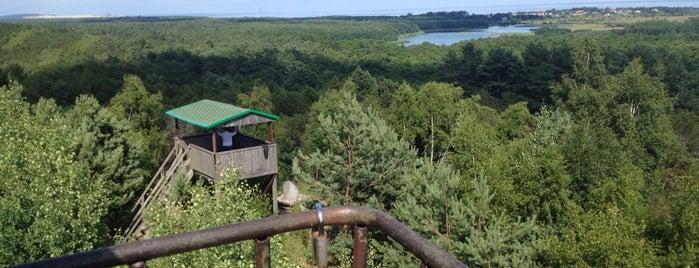 Высота Мюллера на Куршской Косе is one of Lugares favoritos de Ola.