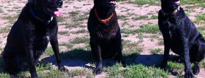 Twin Lakes Dog Park is one of Orte, die Tara gefallen.