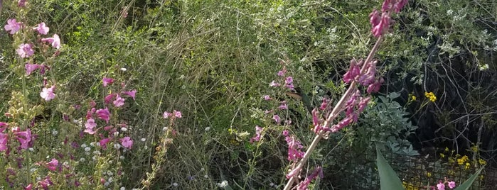 Desert Wildflower Loop Trail is one of Lieux qui ont plu à Farouq.
