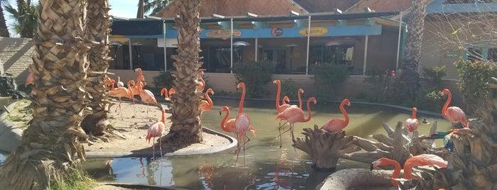 World Wildlife Zoo and Aquarium - Penguin Exhibit is one of Orte, die Jordan gefallen.