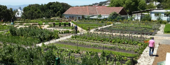 Oranjezicht City Farm is one of Best of Cape Town off the beaten track.