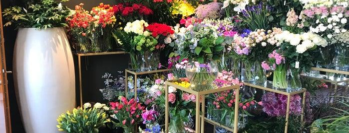 Dos Gardenias Flower Shop is one of Koło Domku 🏡.