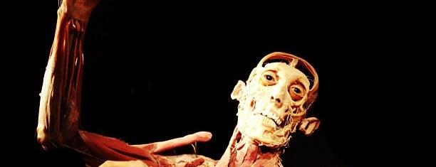 The Human Body Exhibition is one of Musei da visitare.
