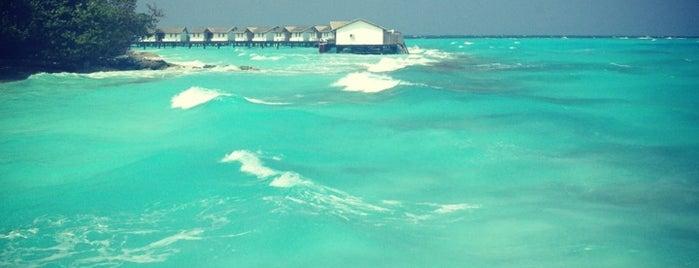 Reethi Beach Resort is one of Locais curtidos por Volary.