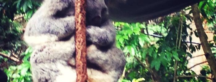Koala Park Sanctuary is one of Simon : понравившиеся места.