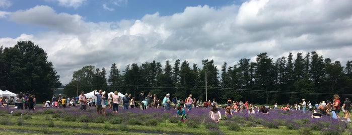 Lockwood Lavender Farm is one of Upstate Adventures.