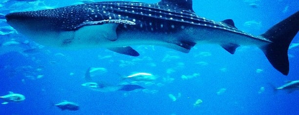 Georgia Aquarium is one of NORTH CAROLINA + GEORGIA.