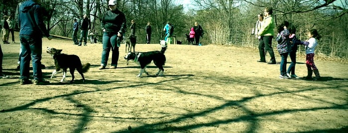High Park Dog Park is one of Parks and Walks.
