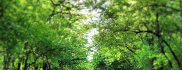 İTÜ Ağaçlı Yol is one of Burak'ın Beğendiği Mekanlar.