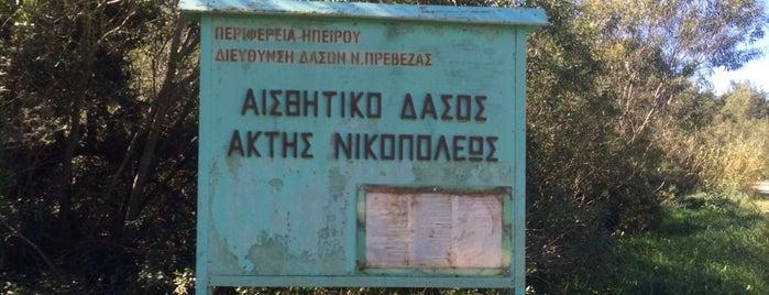 Περιαστικό Δάσος Νικόπολης is one of Amazing Epirus.