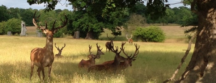 Windsor Great Park is one of Lugares favoritos de Carl.