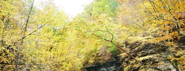 McCormick's Creek Falls is one of สถานที่ที่ Joey ถูกใจ.