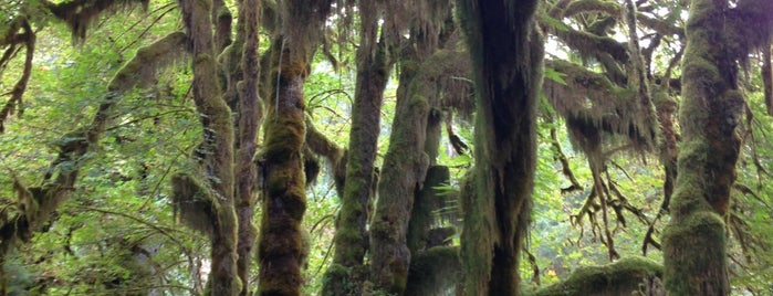 Hall of Mosses is one of Off-Grid Birthday.